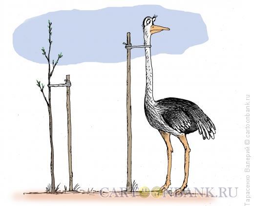 Карикатура: Несгибаемый, Тарасенко Валерий