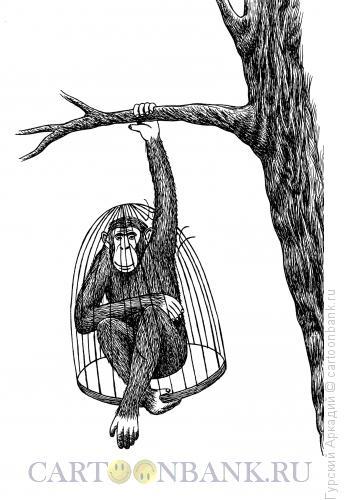Карикатура: обезьяна в клетке, Гурский Аркадий