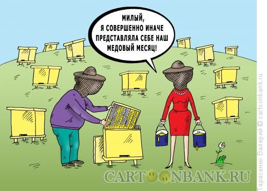 Карикатура: Медовый месяц, Тарасенко Валерий