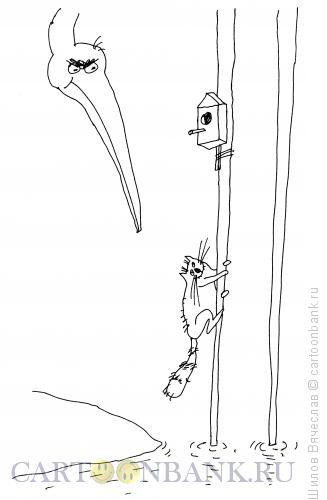 Карикатура: Кот и птица, Шилов Вячеслав
