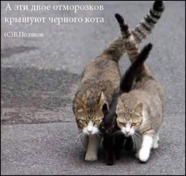 Мем, Эцилопп