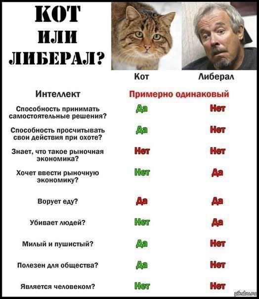 Мем: О котегах, Максим Камерер
