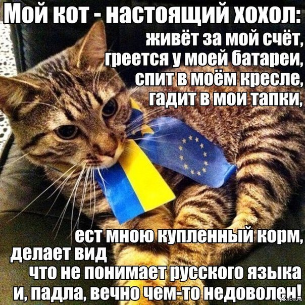Мем: Котохохлы, Максим Камерер