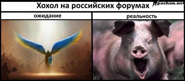 Мем: Ожидание и реальность, Максим Камерер