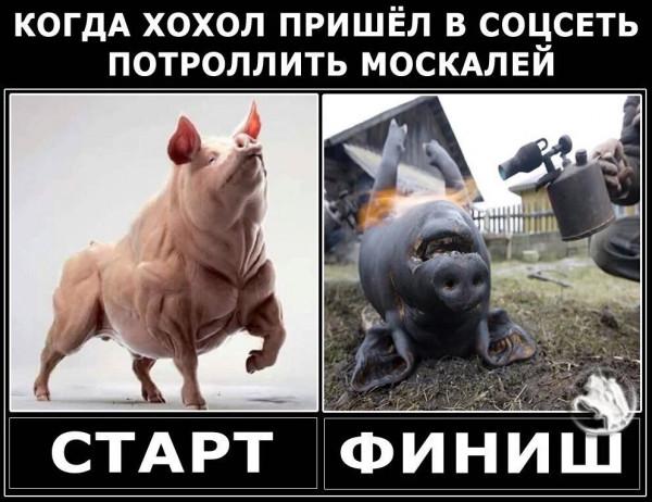 Мем: Молчание свинят, Максим Камерер