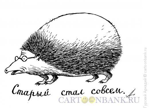 Карикатура: лысый ёжик, Гурский Аркадий
