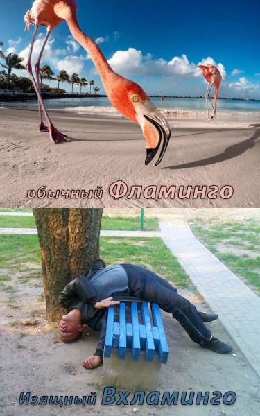 Мем: Вхламинго, Langolier