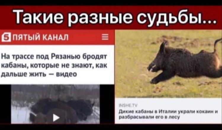 Мем: Их нравы, Максим Камерер