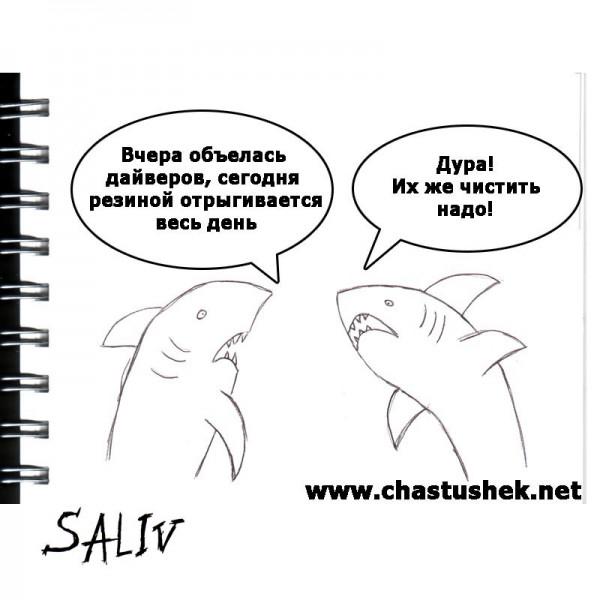 Карикатура: Акулы, chastushek