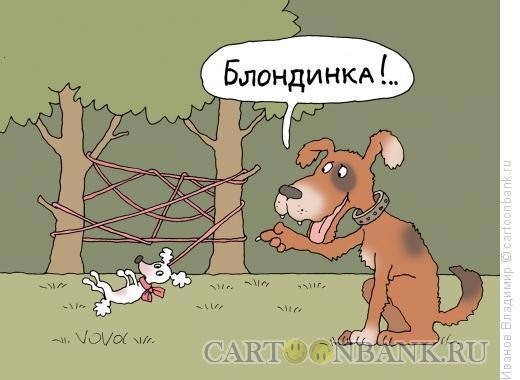 Карикатура: Собака блондинка, Иванов Владимир