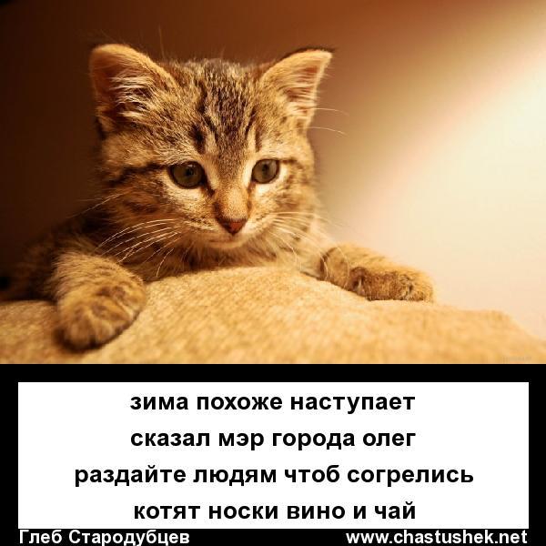 Мем: Раздать котиков!, chastushek