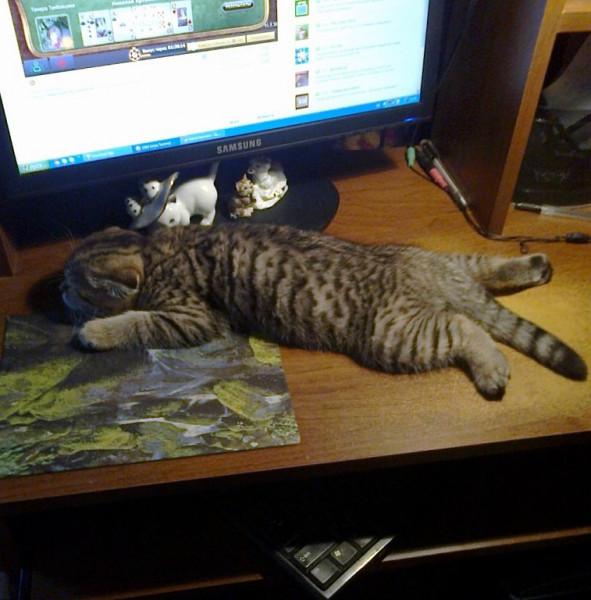 Мем: Кошка на мышке, Олег Тамбовцев
