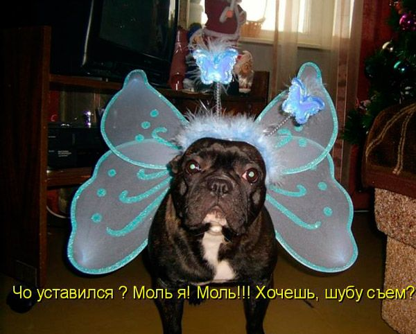 Мем: У всех девушек бабочки в животе требуют любви,  и только моль у Тамары требует шубу.
