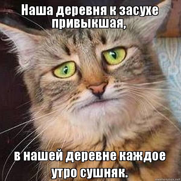"""Мем: """"засуха"""", RF"""