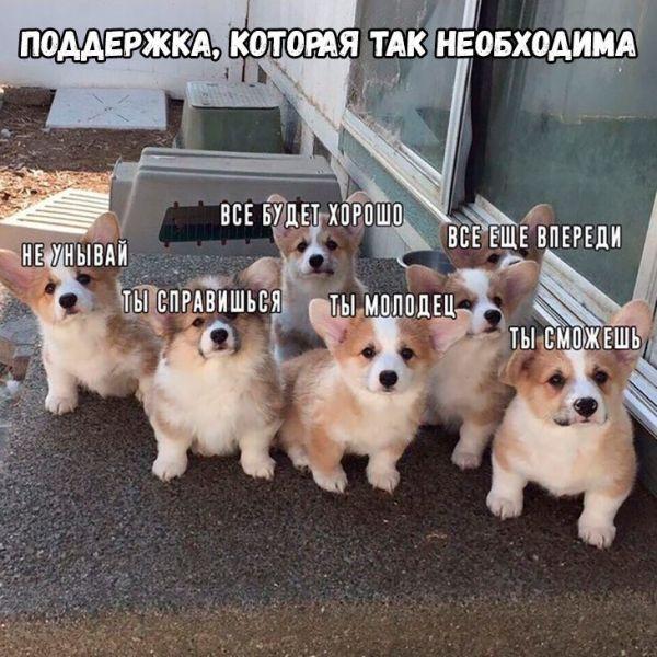 Мем: Получат в полном составе)))