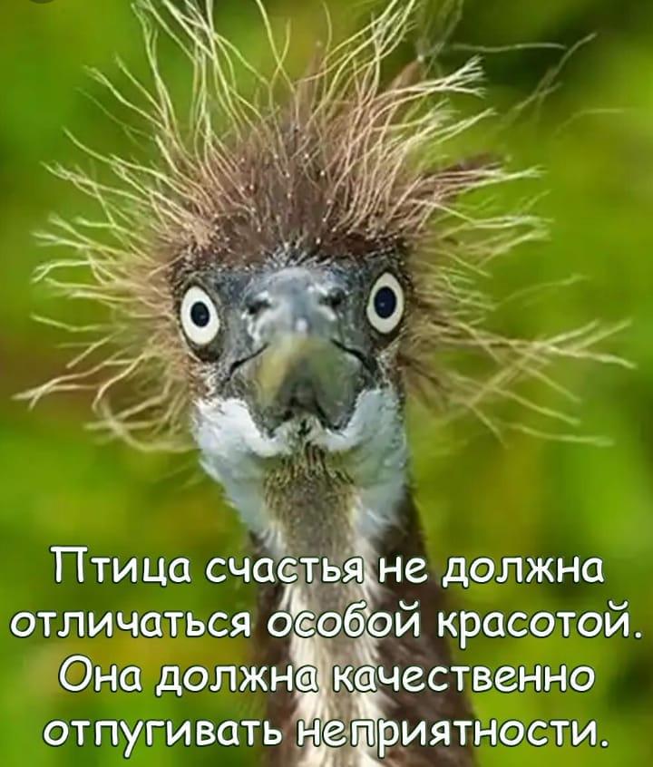 Мем: Птица счастья