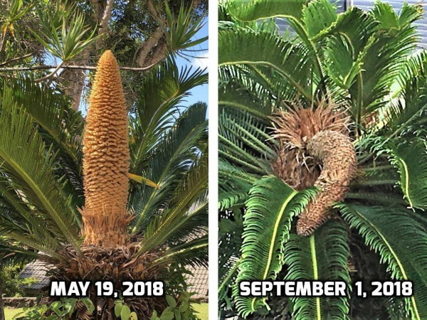 Мем: Хроника саговой пальмы или До и после, Abrp722