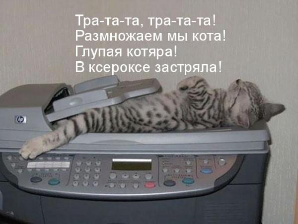 Мем: Размножение, RF