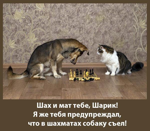 Мем: КОТмейстер, Радуга