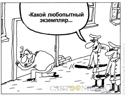 Карикатура: Любопытный экземпляр, Шилов Вячеслав
