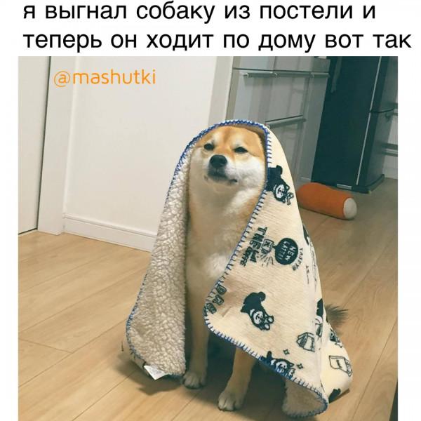 Мем: Выгнал из постели, mashutki