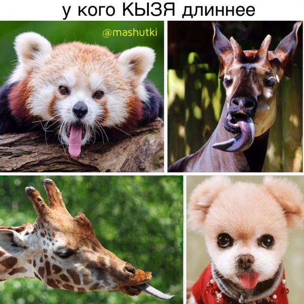 Мем: Кызя, mashutki