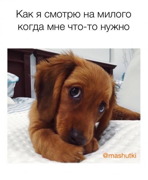 Мем: Как я смотрю на него, mashutki