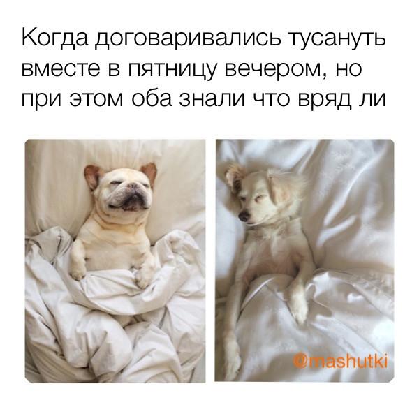 Мем: Тусанем в пятницу, mashutki