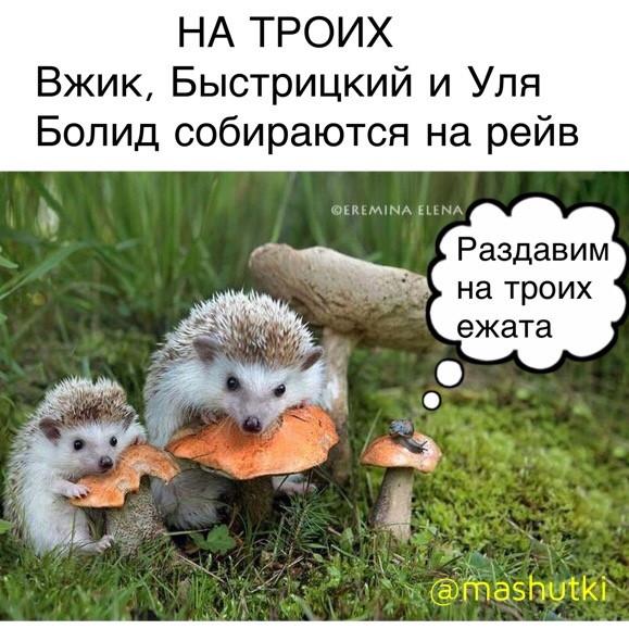 Мем: Грибочки, mashutki