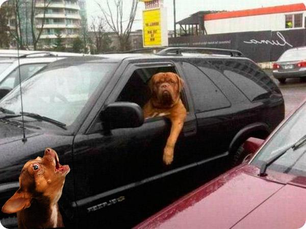 Мем: - Ты замуж за меня пойдешь? - Нет. - Почему? - Я на машине.
