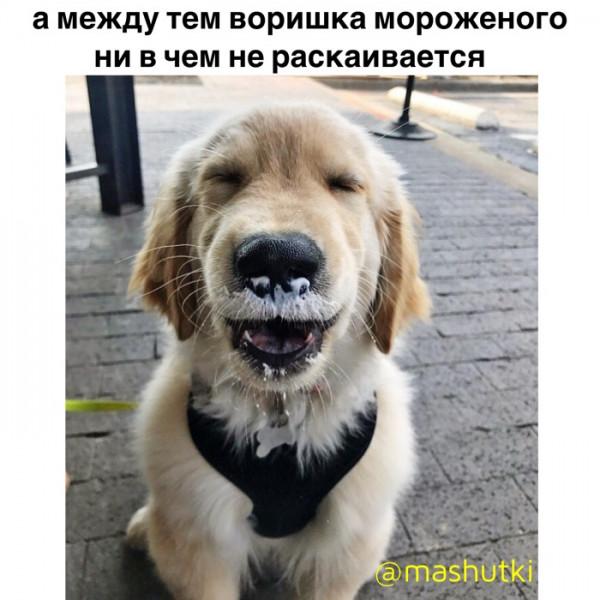Мем: Воришка мороженого, mashutki