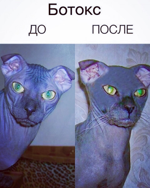 Мем: Кисуль на ботоксе, mashutki