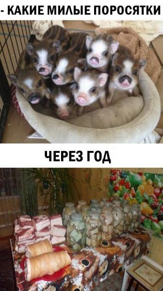 Мем: Чёрный юмор, Кот Отморозкин
