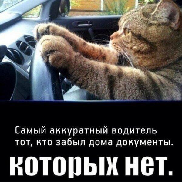 Мем, Матроскин
