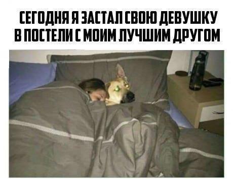 Мем: Двойное предательство, Кот Отморозкин