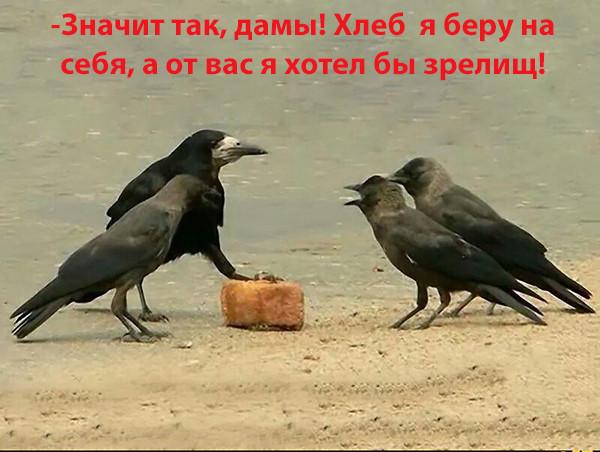 Мем: Хлеб и зрелища, Радуга