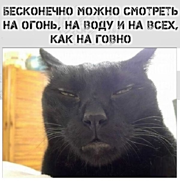 Мем, Социофоб
