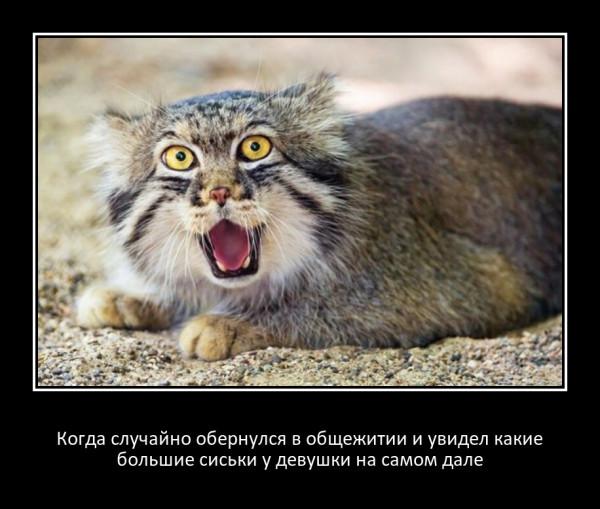 Мем, Мефодий