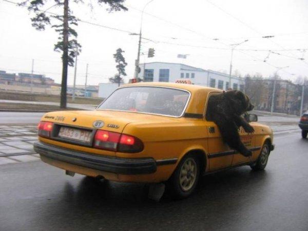 Мем: Шеф, до Казанского!, Дед Макар