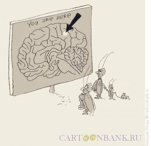 Карикатура: вы находитесь здесь, Алёшин Игорь