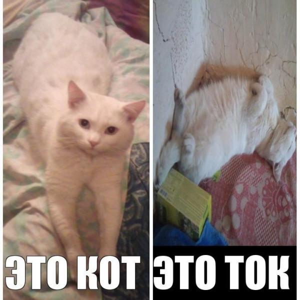 Мем: Кот-ток, Odnick777