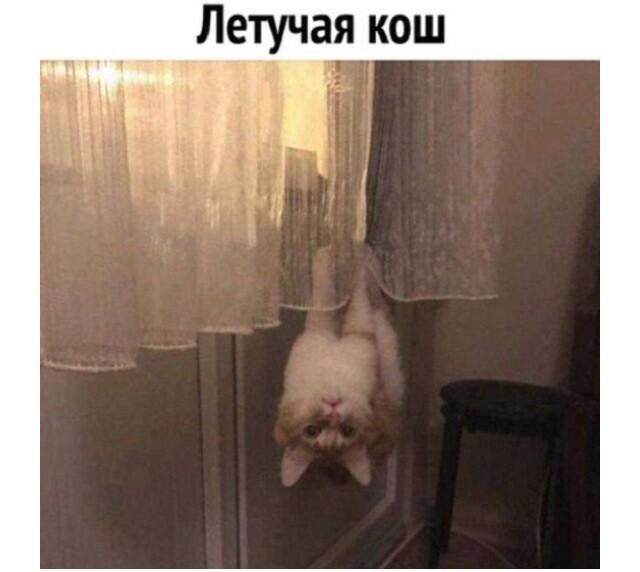 Мем: Кошак, Феш