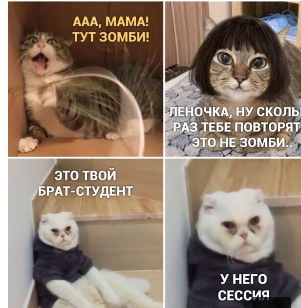 Мем: Про студентов, Феш