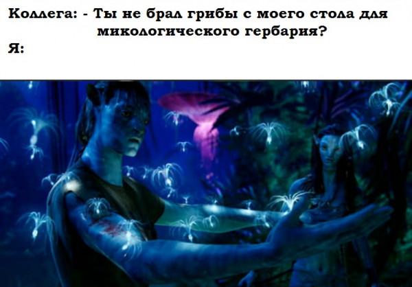 Мем: Грибы, Jethro