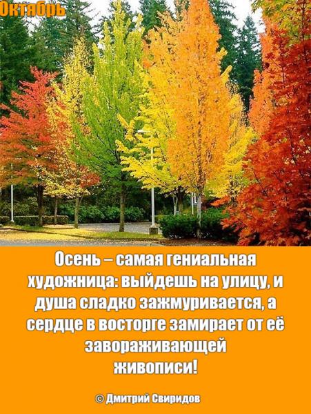 Мем: Золотая пора 🍁, Дмитрий Свиридов