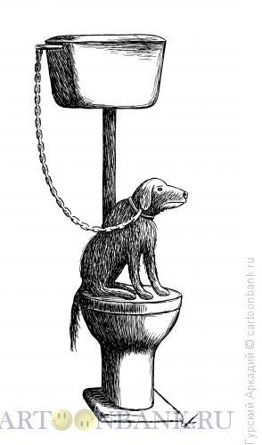 Карикатура: собака на унитазе, Гурский Аркадий