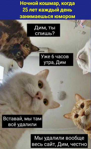 Мем, koscha