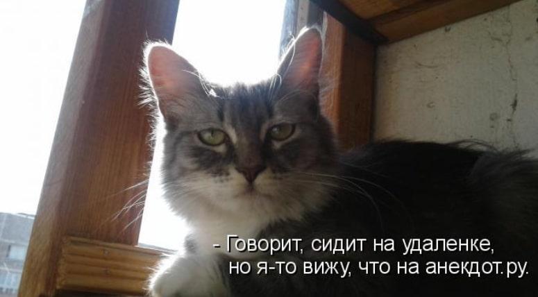 Мем: На удаленке, VladimirMoscow