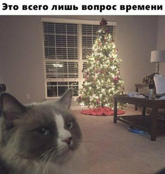 Мем: Скоро во многих квартирах страны., Инна