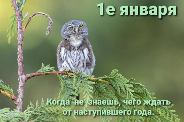 Мем: 2021, Denis_S8